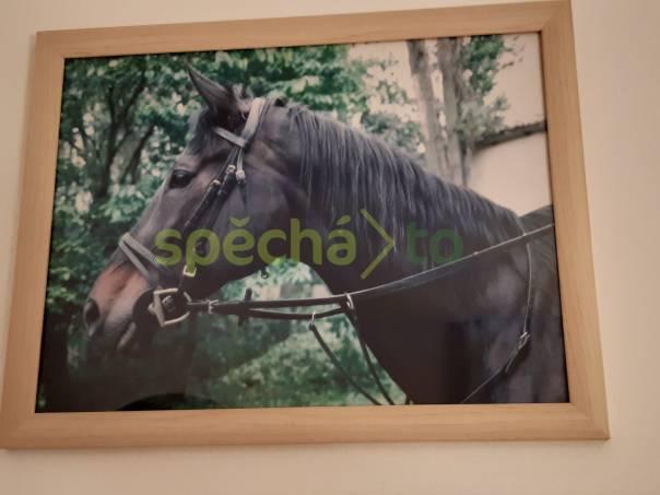 Jezdecká škola SAKO, foto 1 Zvířata, Koně   spěcháto.cz - bazar, inzerce zdarma