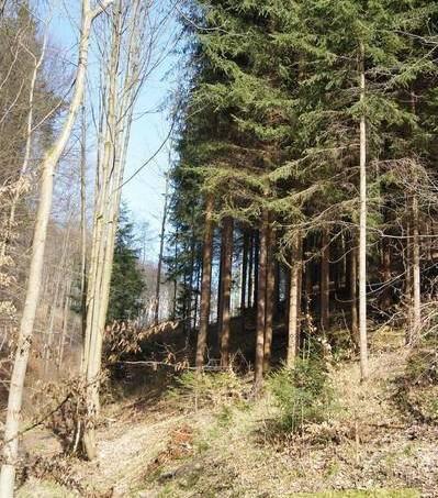 Prodej pozemku, Klokočí, foto 1 Reality, Pozemky | spěcháto.cz - bazar, inzerce