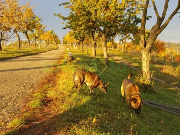 Ronny a  Roza, foto 1 Zvířata, Psi | spěcháto.cz - bazar, inzerce zdarma
