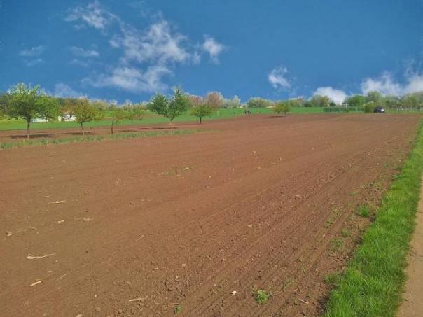 Prodej pozemku, Podivín, foto 1 Reality, Pozemky | spěcháto.cz - bazar, inzerce