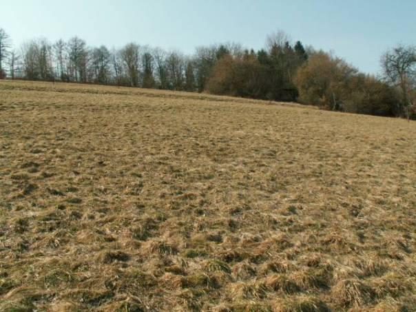 Prodej pozemku, Letohrad, foto 1 Reality, Pozemky | spěcháto.cz - bazar, inzerce