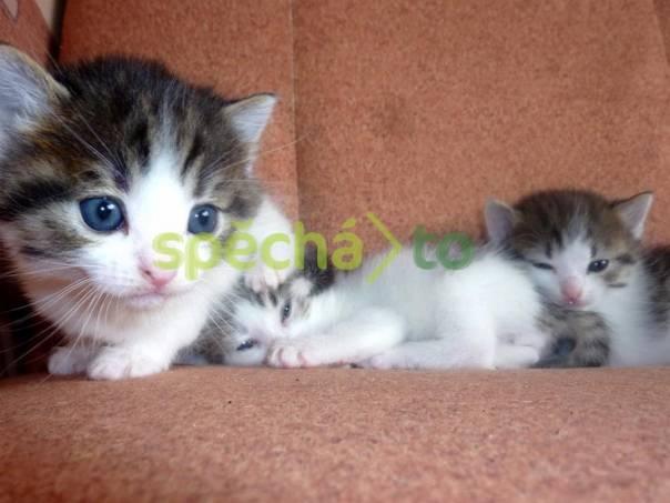 Daruji kotě- mourovatý kocourek 15e12aeaf8