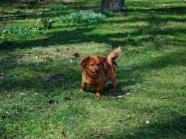 Hledá dlouho domov , Zvířata, Psi  | spěcháto.cz - bazar, inzerce zdarma
