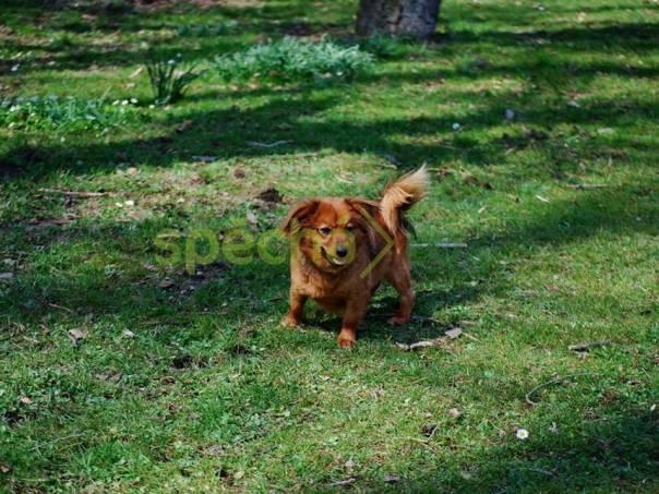 Hledá dlouho domov, foto 1 Zvířata, Psi | spěcháto.cz - bazar, inzerce zdarma