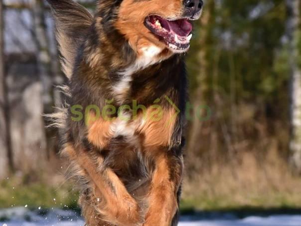 Darujeme opuštěného křížence, foto 1 Zvířata, Psi   spěcháto.cz - bazar, inzerce zdarma