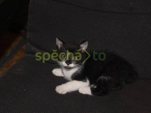 Daruji koťátko, foto 1 Zvířata, Kočky | spěcháto.cz - bazar, inzerce zdarma