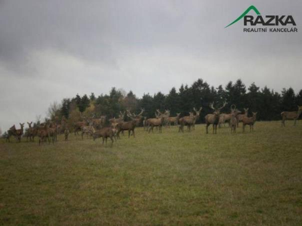Prodej pozemku, Řečice - Křepiny, foto 1 Reality, Pozemky | spěcháto.cz - bazar, inzerce