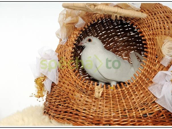 Svatební holubi, foto 1 Akce a večírky, Doprovodný program | spěcháto.cz - bazar, inzerce zdarma