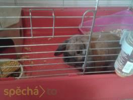hlídání malých zvířat , Zvířata, Služby  | spěcháto.cz - bazar, inzerce zdarma