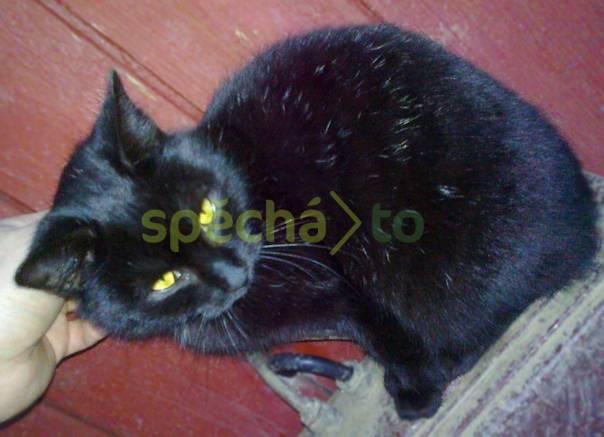 Daruji kotě - kocourek 8138344598