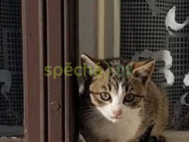 Kočička, foto 1 Zvířata, Kočky | spěcháto.cz - bazar, inzerce zdarma