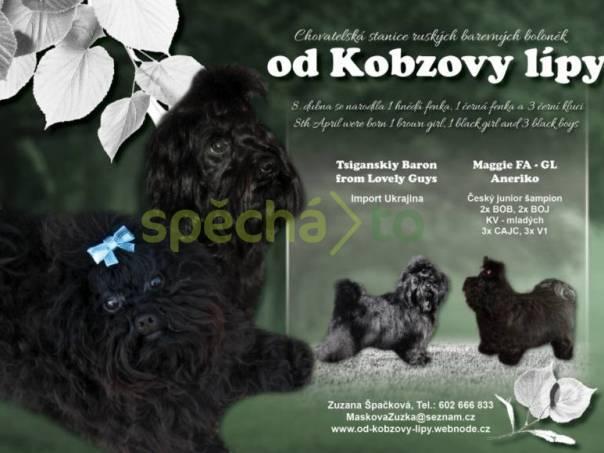 Ruská barevná bolonka štěňátka s PP, foto 1 Zvířata, Psi | spěcháto.cz - bazar, inzerce zdarma