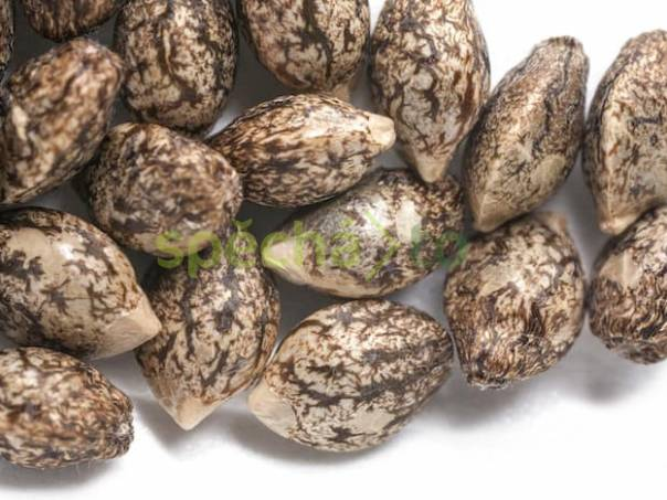 Konopná semínka - Spousta odrůd na výběr - všechno 100% kvalita fem- autoflower, foto 1 Zahrada, zahradní příslušenství, Osivo a plodiny | spěcháto.cz - bazar, inzerce zdarma