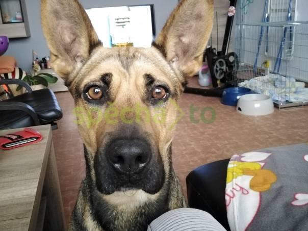 Daruji fenku , foto 1 Zvířata, Psi | spěcháto.cz - bazar, inzerce zdarma
