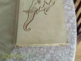 Proč má slon chobot a ptáci peří , Hobby, volný čas, Knihy  | spěcháto.cz - bazar, inzerce zdarma