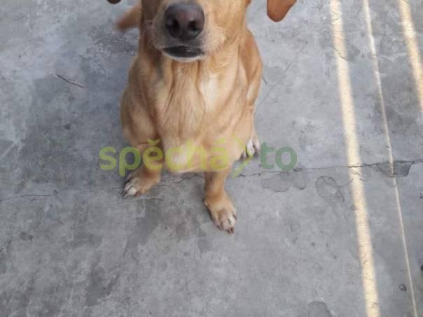 Daruji psa, foto 1 Zvířata, Psi | spěcháto.cz - bazar, inzerce zdarma